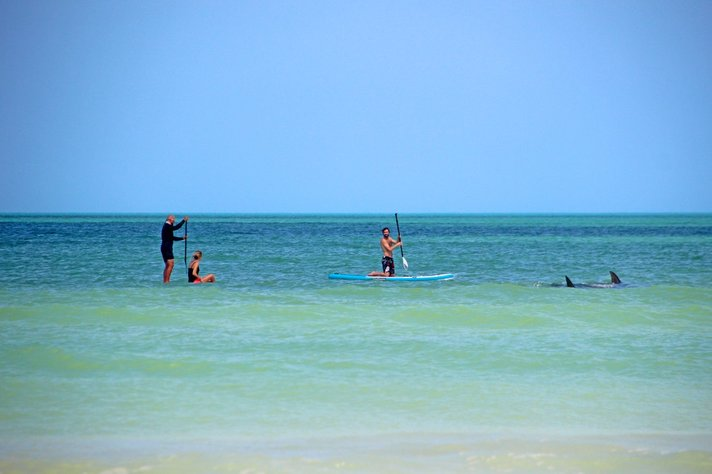 El Cuyo mexico sup boarding with dolphines mantarays clear blue water cancun playa del carmen tulum isla blanca kiteboard lessons iko school