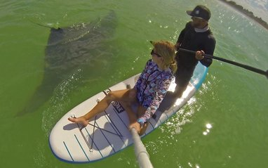 el cuyo seafood mexico best sealife in the yucatan mantaray big sup board fun nature clear blue white sand beach